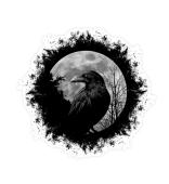 Schwarze Krähe Rabe bei Vollmond