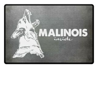 Malinois inside