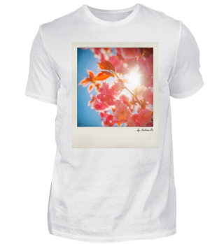 Blütenkirsche | japanese cherry