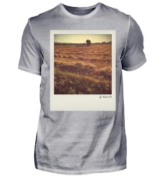 Gemähtes Feld | Mowed Field