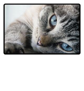 Foto Katzen Fußmatte als Geschenk
