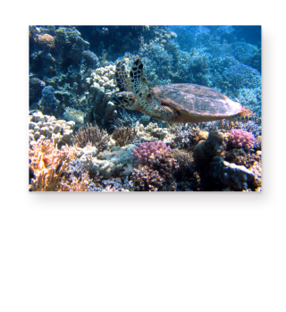 ★ Underwater Coral Reef Sea Turtle 1a