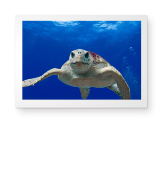 ★ Photo - Wise Sea Turtle - Poster