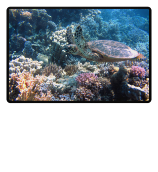 ★ Underwater Coral Reef Sea Turtle 1