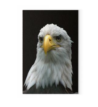 Weißkopf-Seeadler Poster und Leinwand