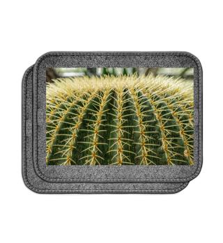 Foto - Kaktus Schwiegermuttersitz 2