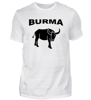 Asien Burma - Büffel Wasserbüffel