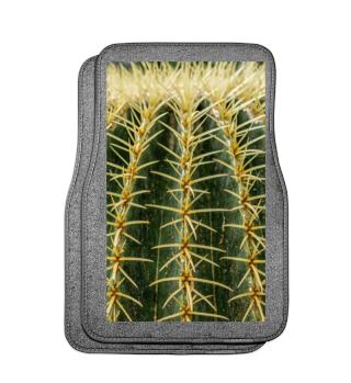 Foto - Kaktus Schwiegermuttersitz Auto 1