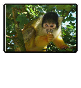 Affe - Monkey
