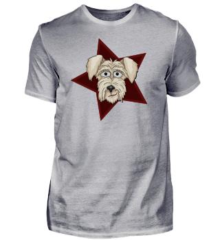 Irish-Terrier Hunde-Star