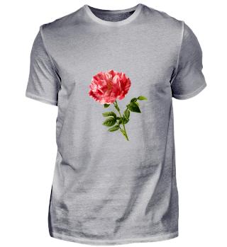 rose blume natur geschenk idee