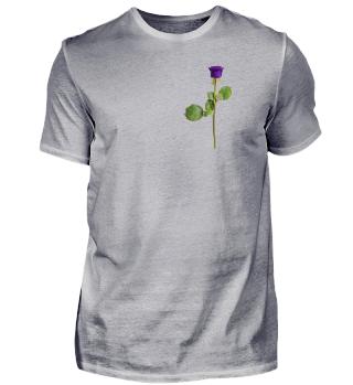 Lila violette Rose