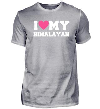 I love my Himalayan Cat
