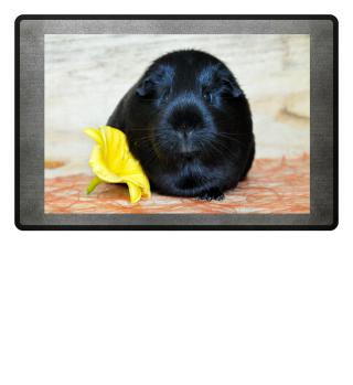 Fußmatte Meerschweinchen