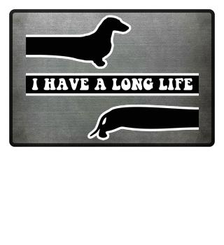 Kurzhaardackel mit langem Leben
