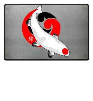 KOI Fish - Nishikigoi Tancho Kohaku 2