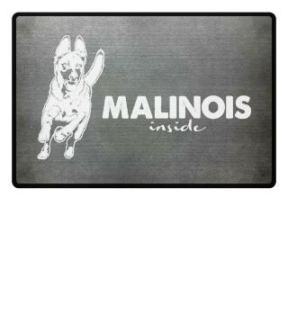 Malinois iside