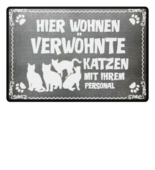 ...4 verwöhnte Katzen mit Personal - Geschenk