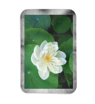 Fleecedecke o. Kuscheldecke Lotusblume weiss Blanket Flower