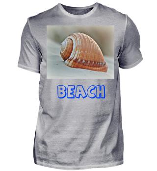 Muschel Strand Sommer Urlaub Sand