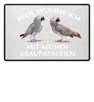 Graupapagei Papagei
