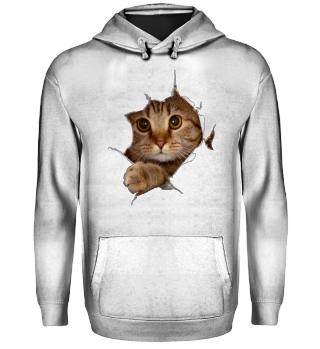 Katze 3D Kätzchen zerrissene Kleidung