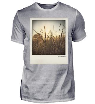 Sonnenaufgang Gras | Sunrise grass
