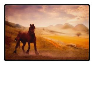 Pferde sind das schönste