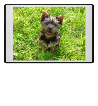 Fußmatte mit Yorkshire Terrier im Gras