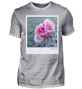 Gefrohrene Rose | frozen rose