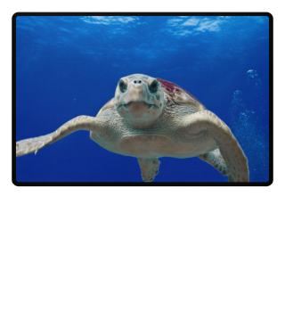 ♥ Photo - Wise Sea Turtle