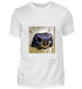 galloway passion scotland cattle bull