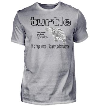 Turtle, Schildkröte, Reptil