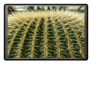 Foto - Kaktus Schwiegermuttersitz