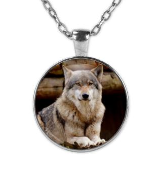 Kette Wolf liegend
