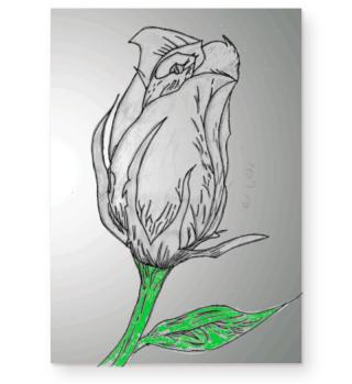gezeichnete Rose