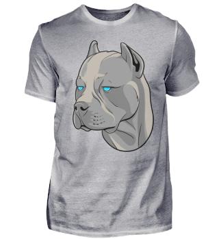 Pitbull mit blauen Augen Kampfhund