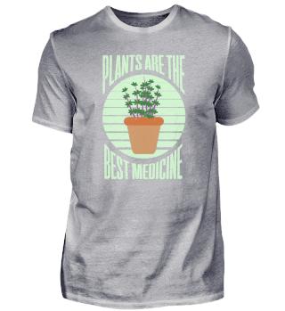 Pflanze Medizin Garten Gartenpflanze